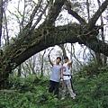 上稜 拱門型樹幹