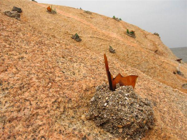 岩石上佈滿這東東