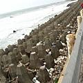 醜陋的海岸