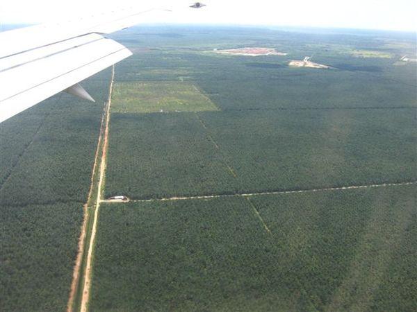 降落前 不知這整片是啥農作物