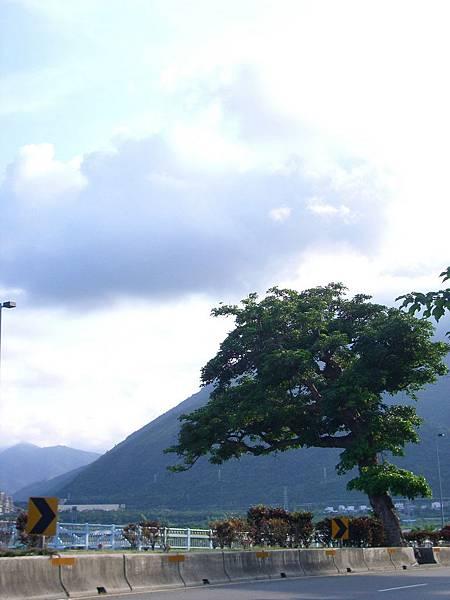 進太魯閣前的大樹