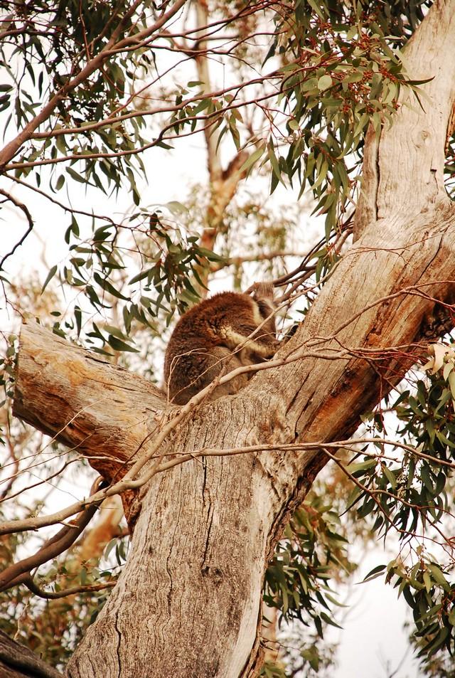 西北澳四日遊_0012