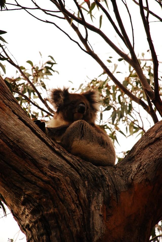 西北澳四日遊_0013