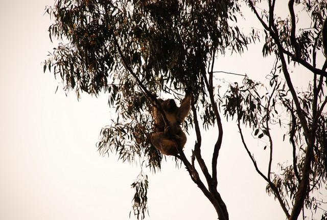 西北澳四日遊_0015