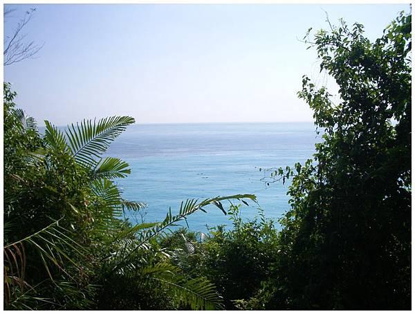 樹林中的太平洋
