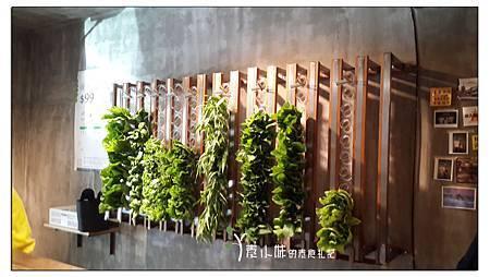 蔬菜牆 vege creek 蔬河蔬食滷味 台北市東區素食 拷貝.jpg
