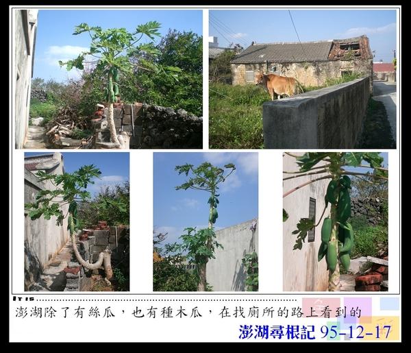 10澎湖的木瓜.jpg