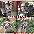 960203好吃的草莓.jpg