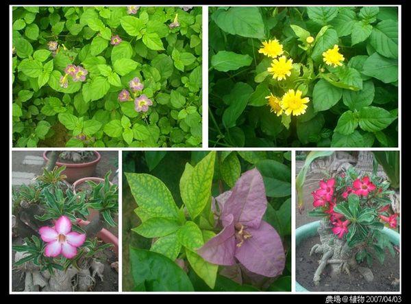 農場植物2.jpg