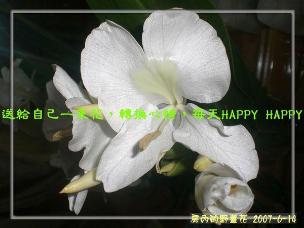 野薑花1.jpg