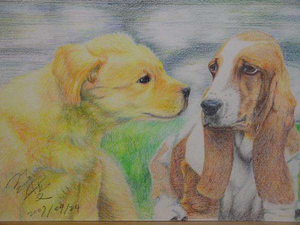 小黃金與短腿長耳獵犬