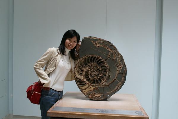 很大的化石