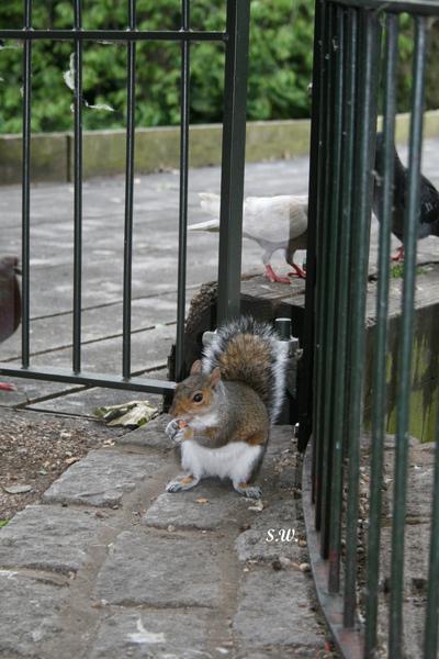 遇到有人餵食小松鼠