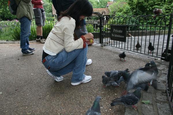 鴿子會吃餅乾