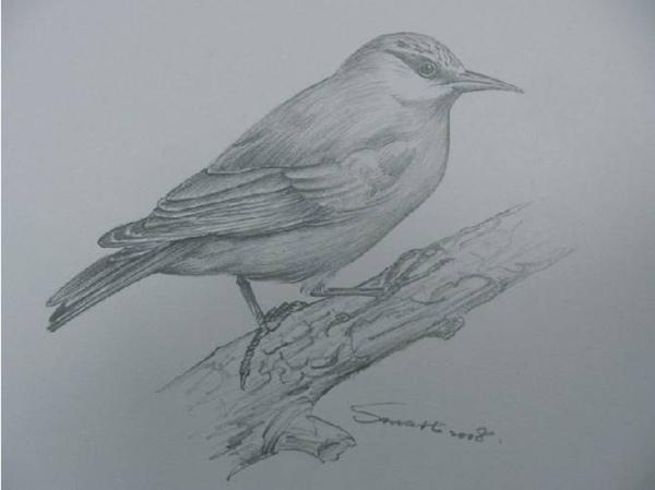 聰明老師畫的鳥.jpg
