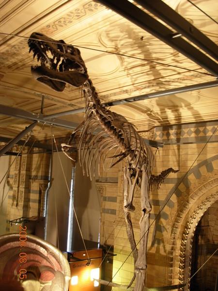 自然史博物館 (18).JPG