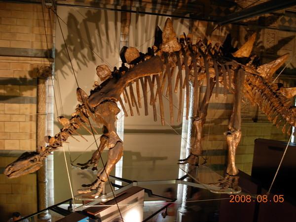 自然史博物館 (20).JPG
