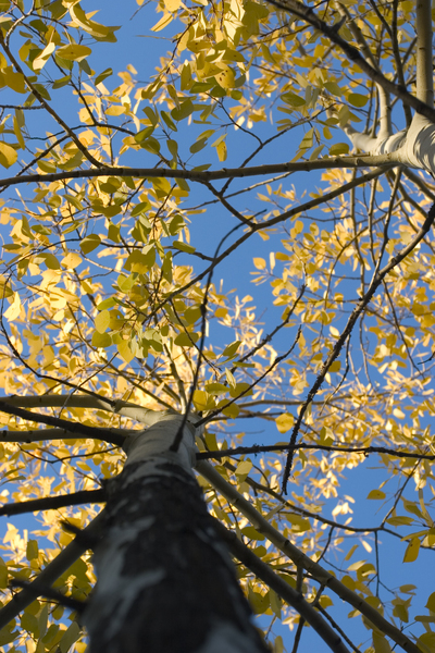 tree with yellow.jpg