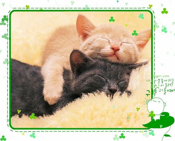 1530716847-loved_kittens