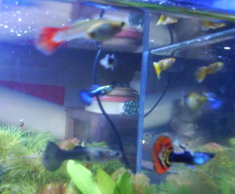 魚 12.jpg