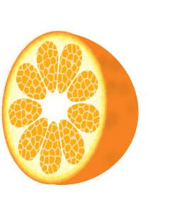 柳橙.jpg