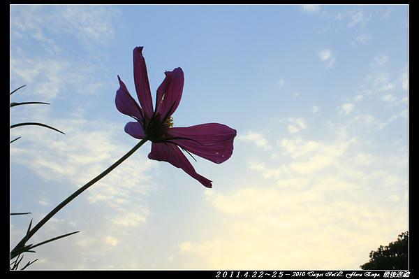 IMG_8314.jpg