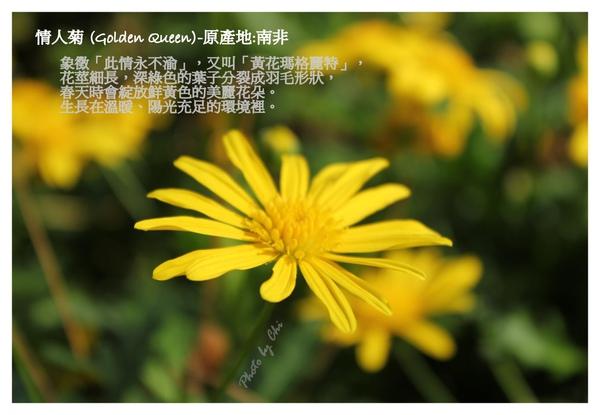 991223-with 靜佳之12小時花博行.jpg