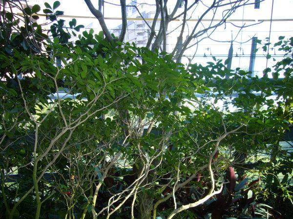 植物園的植物