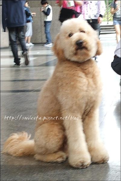 一中街遇到的大狗狗1