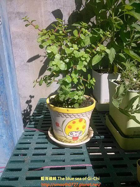 蔬果盆栽園藝記趣