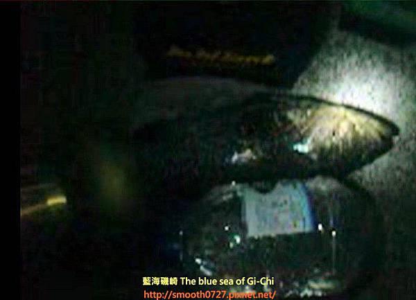 台東 小港漁港夜釣