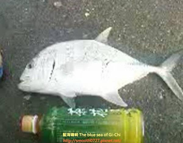 台東 烏石鼻漁港釣遊
