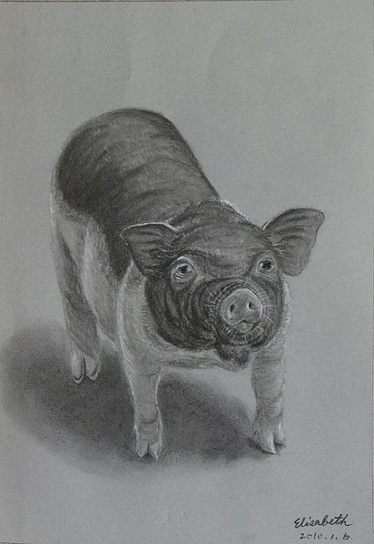 2010/1/6 麝香小豬