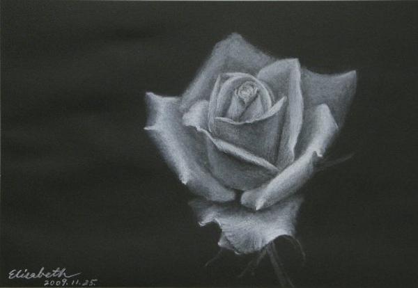 2009/11/25 夜裡的白玫瑰
