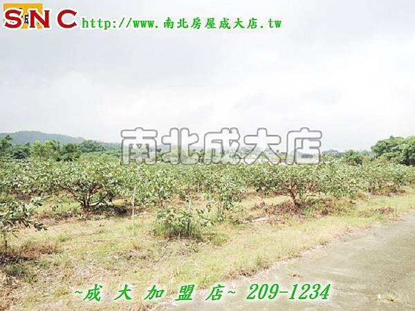 DSCN5542