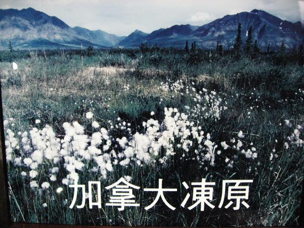 加拿大凍原的告示牌
