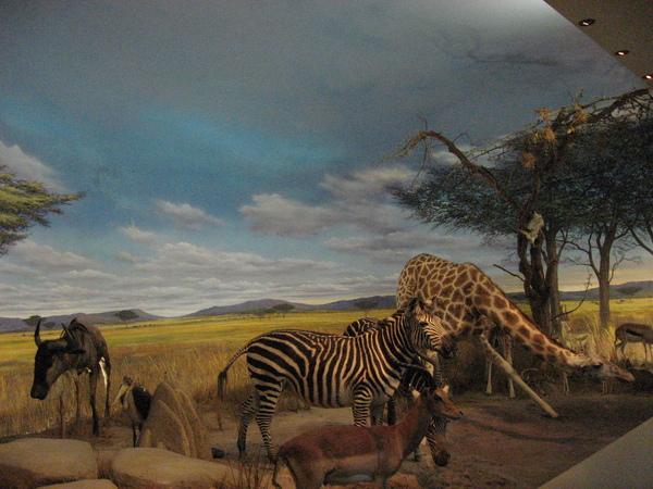 東非稀樹草原全景