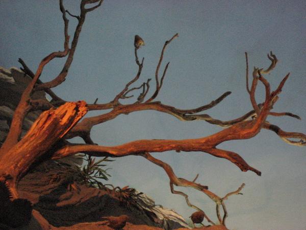 停在樹枝上的鷽鳥