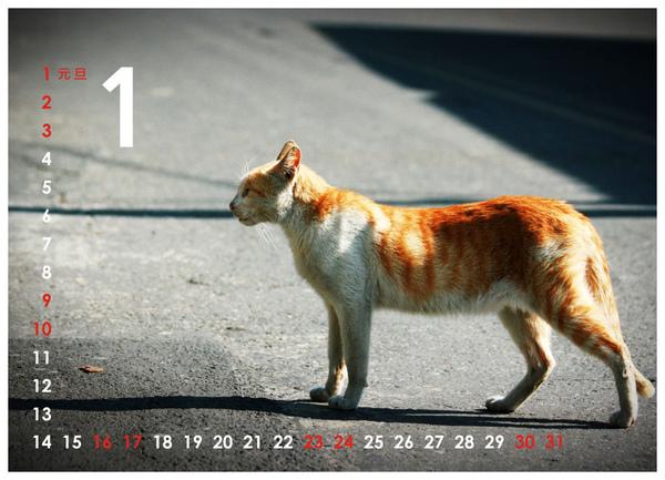 2010尋貓趣01.jpg