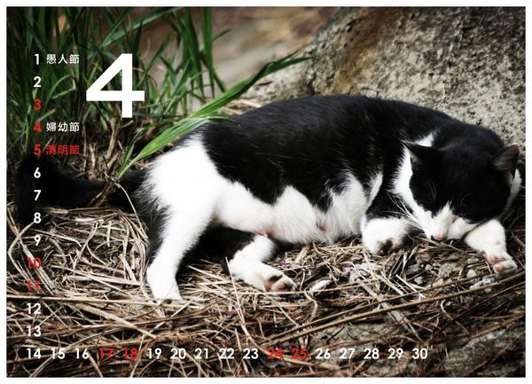2010尋貓趣04.jpg