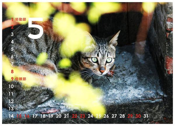 2010尋貓趣05.jpg
