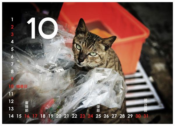 2010尋貓趣10.jpg