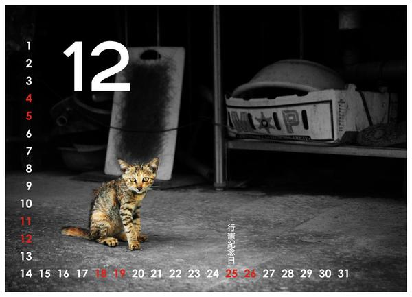 2010尋貓趣12.jpg