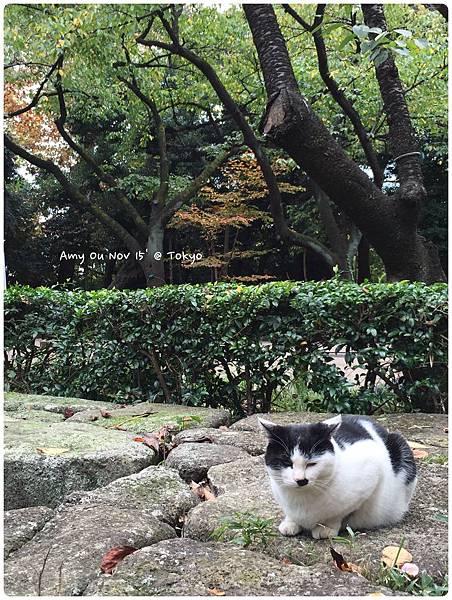cat138.jpg