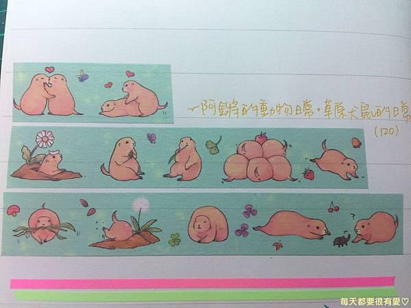 草原犬鼠紙膠帶