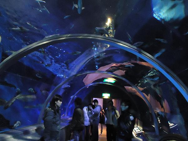 海底隧道‧尼克斯海洋公園‧登別