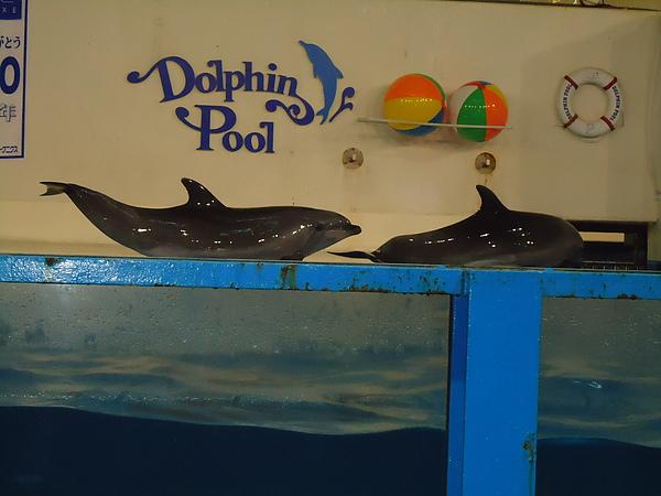 海豚表演‧尼克斯海洋公園‧登別