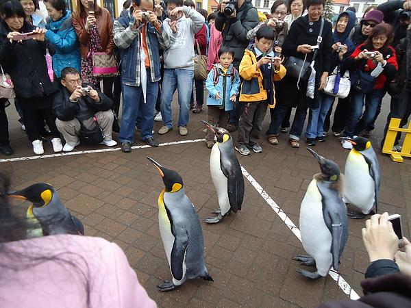 企鵝遊行‧尼克斯海洋公園‧登別