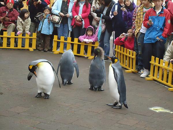 企鵝介紹與解說‧尼克斯海洋公園‧登別