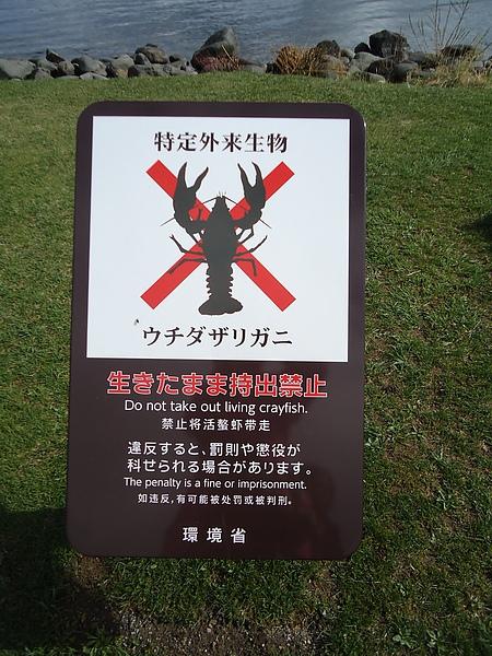 禁止攜走湖中生物的告示牌‧洞爺湖